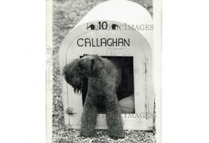 1979-Callaghan-400-1