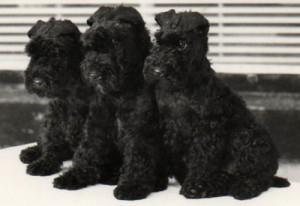 Three happy healthy adorable puppies