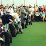 Image of Kerry Blue Terriers being judged overseas