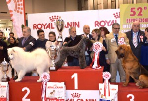 VINCITORI-EXPO-CANINA-2016-2-400-275-1