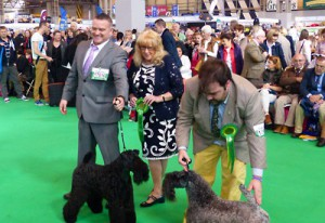Crufts-2016-BOB-and-RBB-13Mar2016-400-275-1